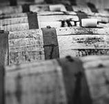 gins-belgique-terra-nova.jpg